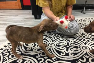 Meet Rosie & Daisy! These playful pups are available for adoption at HSSM