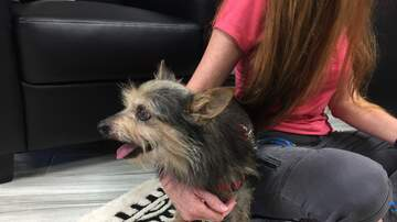 Pet of the Week - Meet our friend Steven Tyler! He is a 6 year old male Yorkie mix.