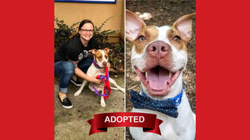 Wags with Wendy - Wags with Wendy 08/21 - Apple ADOPTED!