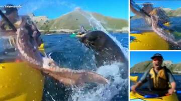 Klinger - Seal Slaps Kayaker w/Octopus Mistaking Him For A Rock?