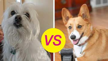 Saturday Morning Live - Which Dog Is Better At Catch?