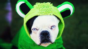 Dana Tyson - Dress Your Pets For Halloween! Share Your Pics!