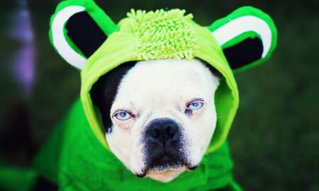 Dana & Jay in the Morning - Dress Your Pets For Halloween! Share Your Pics!