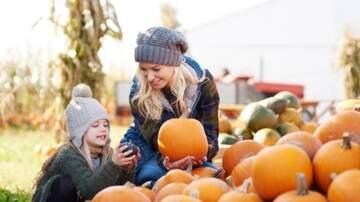 Julie's - Choosing the Perfect Pumpkin