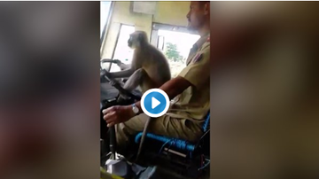 Woody Johnson - (WATCH) A Monkey Helping To Steer The Bus