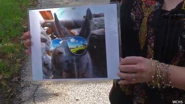 Coast to Coast AM with George Noory - Thieves Replace Stolen Mail with Weird Llama Photo
