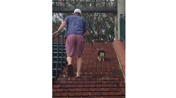 JB - Corgi Dog Hops Up Long Set of Stairs