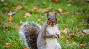 Amelia - Support Squirrel Kicked Off Flight