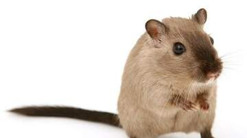 Bromo - Sorry Richard Gere, You'll Have To Leave Fred ( His Gerbil ) At Home..:(