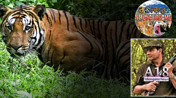 Outkick The Coverage with Clay Travis - Clay Travis Talks to Renowned Tiger Hunter on 'Hunt of the Century'