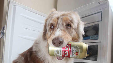 Weird News - Texas Bar Owners Create Line Of Beer For Dogs