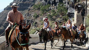 Patty Rodriguez - Greece Bans 'Overweight' Tourists From Riding Donkeys