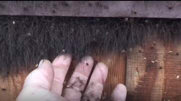 National News - Watch Your Nightmare Come to Life With Thousands of Spiders on Heater Vent