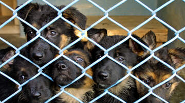 Temple - Puppy Mill Busted And Pups Are Ready For Adoption