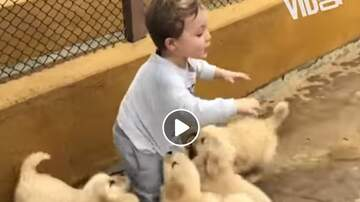 Nick Wize - Puppies Pouncing on People