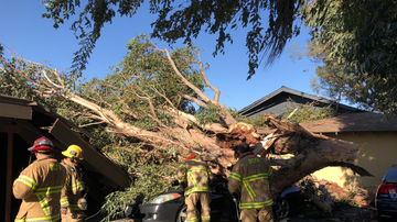 Local News - High Winds Cause Tree to Fall on Car in Orange County, Killing Woman