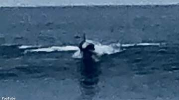 Coast to Coast AM with George Noory - 'Mystery Creature' Spotted at California Beach