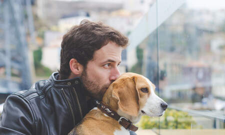 Steve & Gina's Blog - Dogs really can understand language