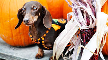 Pet Planet - Halloween Safety Tips For Your Pets