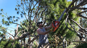 - Downed Trees In Your Yard or On Your Street: Who is responsible?