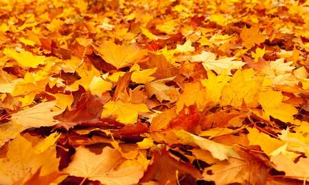 Local News Stories WCH - Bainbridge Fall Festival of Leaves Queen Opens Event