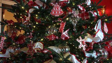 Dave Styles - There's a Christmas Tree-Infesting Bug That Hatches Eggs Inside Your House!