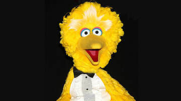News - The Puppeteer Who Plays Big Bird on 'Sesame Street' is Retiring