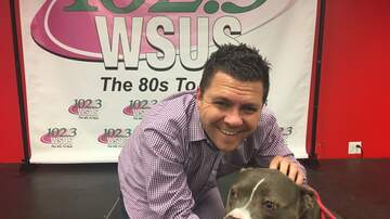 Steve Allan Pet of the Week - Let's Help My Pet Of The Week, Elvira Get Adopted