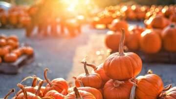 Scott and Sadie - Five Health Benefits of Pumpkin
