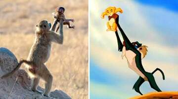 Klinger - Monkey Holds Its Baby To The Sky Like Simba In Lion King