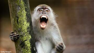 Coast to Coast AM with George Noory - Monkeys Kill Man by Pelting Him with Bricks
