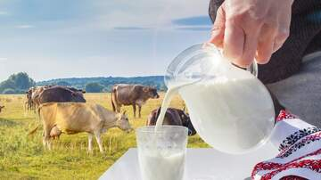 Marty and Jodi in the Morning - PETA Claims Cow's Milk Symbolizes White Supremacy
