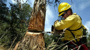Noticias Nacionales - Michigan Brothers Fined $450,000 For Removing Trees On Their Own Property
