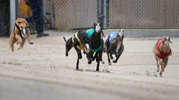 Robin Rock - Thinking about a greyhound? Several thousand are about to need homes