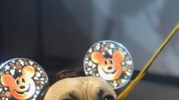 Brody - Sunny Pet Of the Week Dozer the Pug