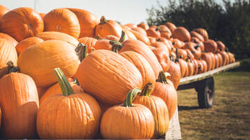 Walter Brown - If you're ready for Pumpkin Spice, here are the top 10 products!