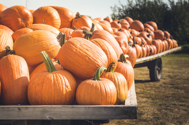 Pumpkins Getty Images