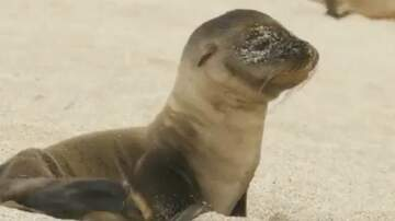 Katie Price Blog - Happy Wednesday! Here's a Baby Sea Lion To Lift Your Spirits