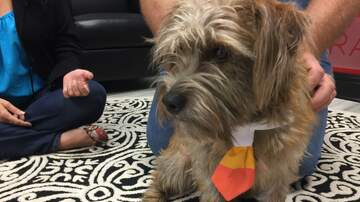 Pet of the Week - Meet Boudreaux, our Pet of The Week from the Humane Society of South MS