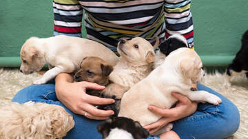 Allison - Get Paid $100 An Hour To Play With Puppies!