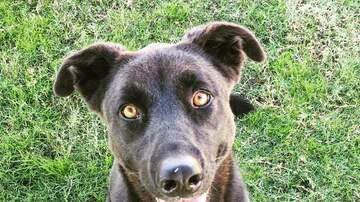 Danny Spanks - Beautiful black Bella still needs a home!