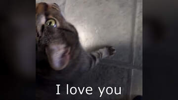 Elvis Duran - This Adorable Kitten Can Say I Love You (Video)