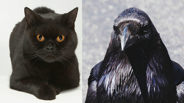 Weird News - Even Google Can't Tell If This Is A Cat Or A Crow