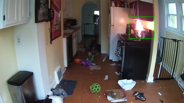 Trending - Video Shows Dog Turning On Stove, Starting Fire, Nearly Burning Down House