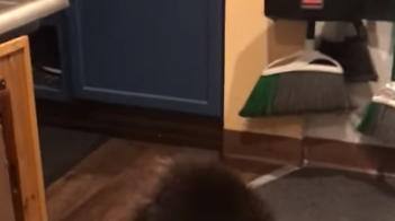 Stu - Porcupine Gets Bounced From Alaska Bar