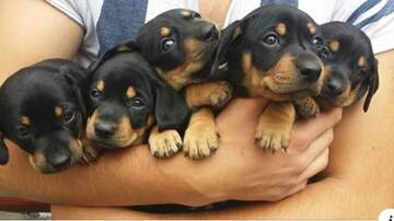Trendy Topics - This Dream Job Will Pay You $100 An Hour To Play & Cuddle With Puppies