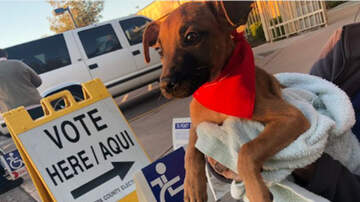 Headlines - Humane Society Brings Puppies To The Polls To Help Calm Voters