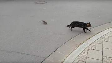 Bret Saunders - Ever Wanna See A Rat Chase Off A Cat?