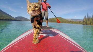 Klinger - This Cat Lives His Best Life Paddleboarding In Canada