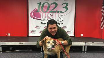 Steve Allan Pet of the Week - Let's Help Little Bit Get Her New Furever Family!